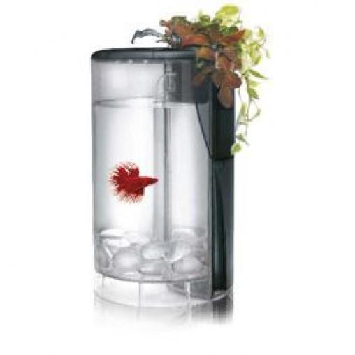 Ocean Free Betta Flora Tank (Options Available)